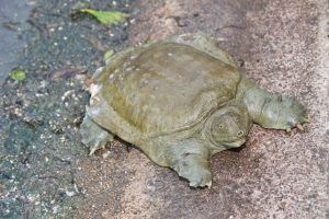 Tips To Enhance Your Soft Covering Turtle Food